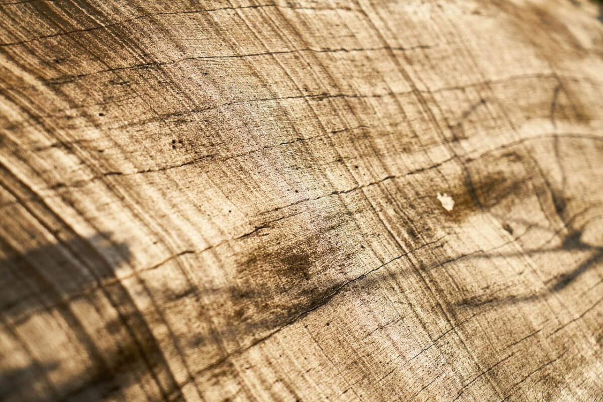 ピザのプレートといえば木製が人気!そのメリットをいろいろ調査してみた! 1