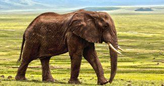 【象を見ながらピザを食べよう】人気動物園のおいしい食事 14