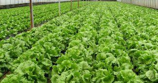 【冷凍ピザを食べながら学ぼう】農薬を使わない、ベランダ菜園のコツ 4