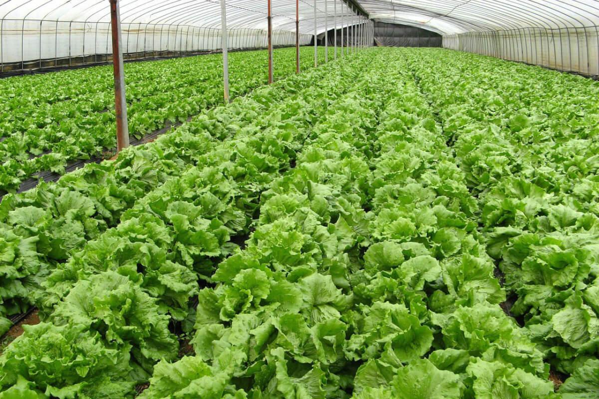 【冷凍ピザを食べながら学ぼう】農薬を使わない、ベランダ菜園のコツ 1