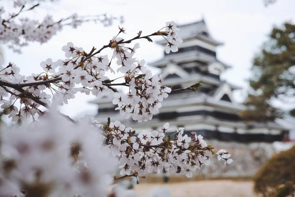 【春のピザまつり】さくら咲くフォンターナのスプリングピッツァ 2